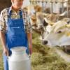 Tie stall milking