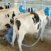 RTS pipeline milking system