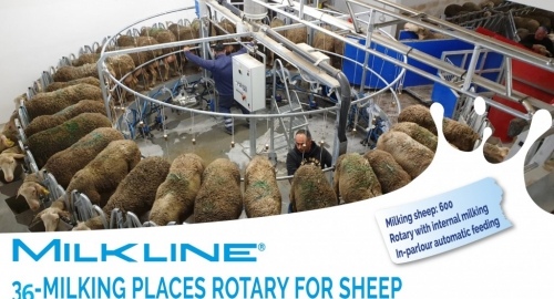 New Rotary milking parlour for sheep
